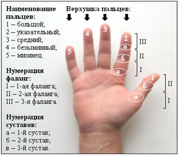 как читать по руке и суставам пальцев скачать